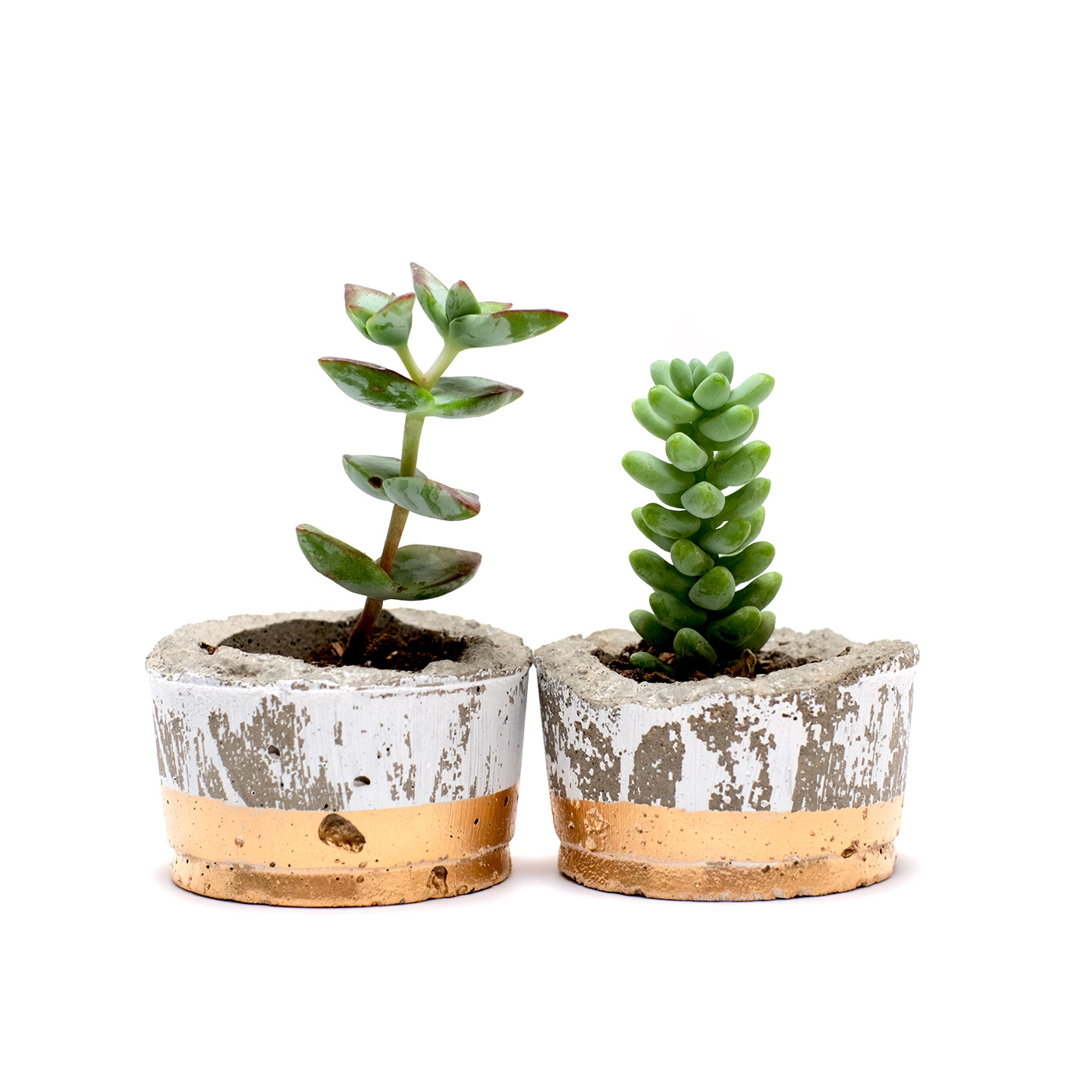 small-plant-together